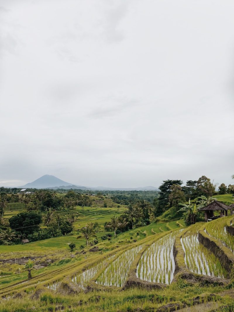 Jatiluwih rice terraces on a gloomy day